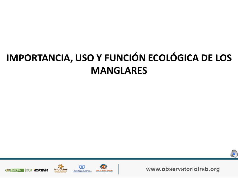 IMPORTANCIA, USO Y FUNCIÓN ECOLÓGICA DE LOS MANGLARES LECTURA 3: La importancia de los manglares es múltiple y obedece a la función que cumple cada uno de sus componentes bióticos y abióticos dentro del ecosistema y a la contribución de estos en el bienestar humano, por lo que su importancia se puede dimensionar desde el punto de vista científico, ecológico, estético, recreacional, social y económico (Sánchez- Páez et al, 2000a).