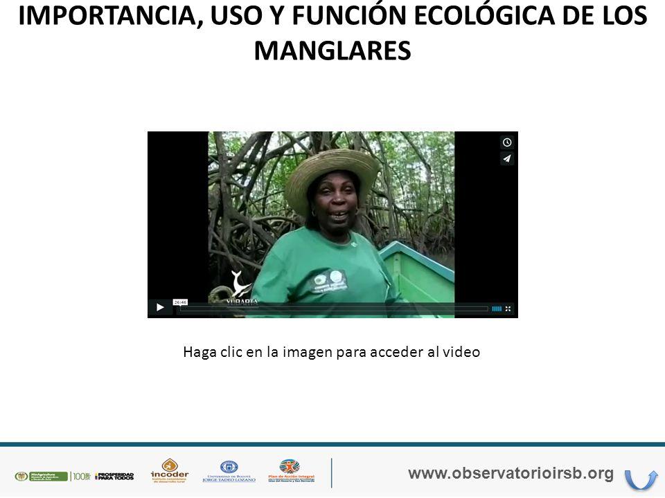 IMPORTANCIA, USO Y FUNCIÓN ECOLÓGICA DE LOS MANGLARES www.observatorioirsb.org
