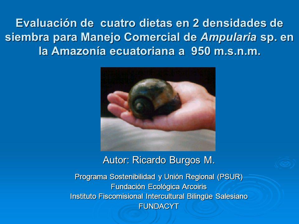 Evaluación de cuatro dietas en 2 densidades de siembra para Manejo Comercial de Ampularia sp.