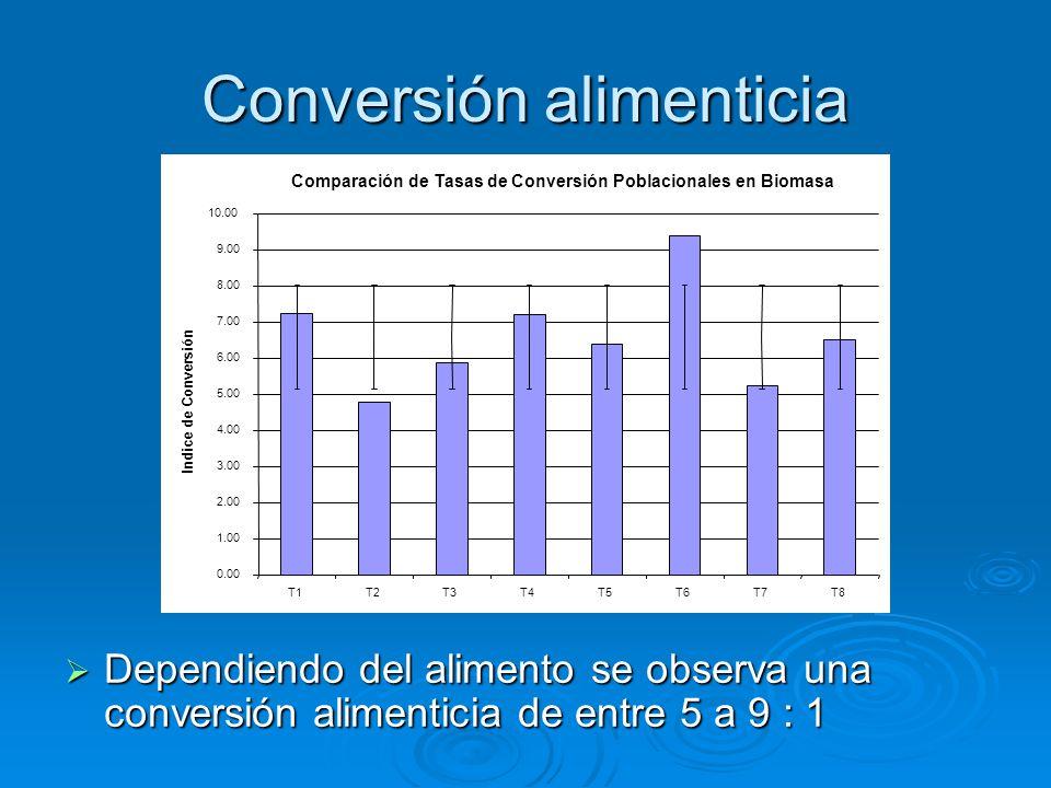 Conversión alimenticia  Dependiendo del alimento se observa una conversión alimenticia de entre 5 a 9 : 1 Comparación de Tasas de Conversión Poblacionales en Biomasa 0.00 1.00 2.00 3.00 4.00 5.00 6.00 7.00 8.00 9.00 10.00 T1T2T3T4T5T6T7T8 Indice de Conversión