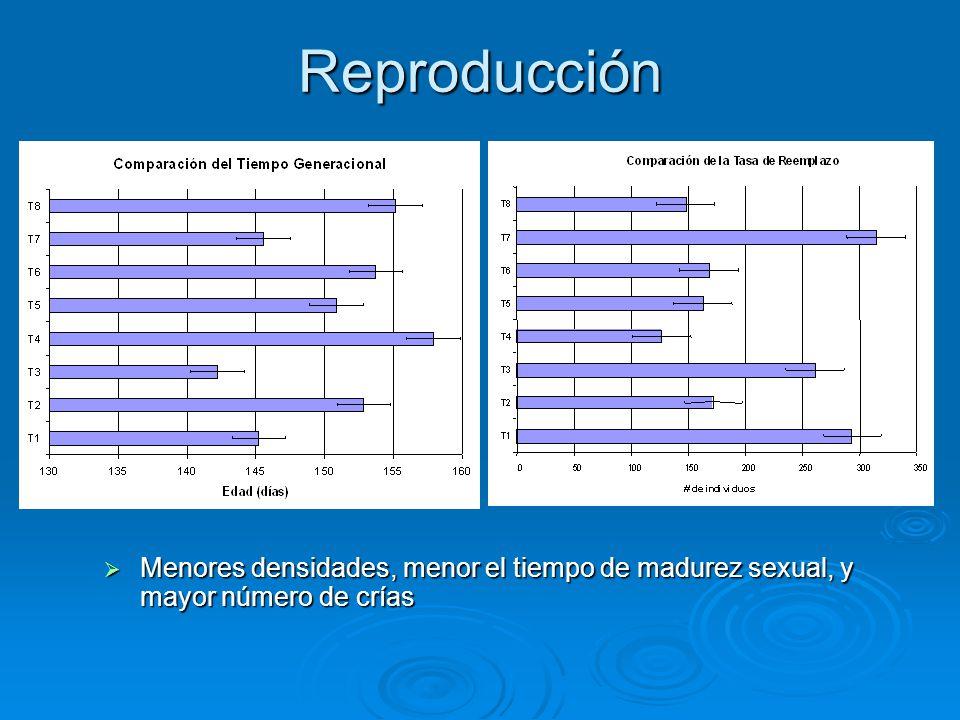 Reproducción  Menores densidades, menor el tiempo de madurez sexual, y mayor número de crías