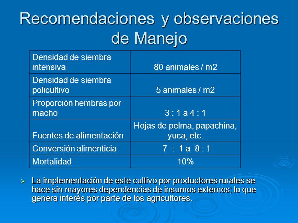 Recomendaciones y observaciones de Manejo  La implementación de este cultivo por productores rurales se hace sin mayores dependencias de insumos externos; lo que genera interés por parte de los agricultores.