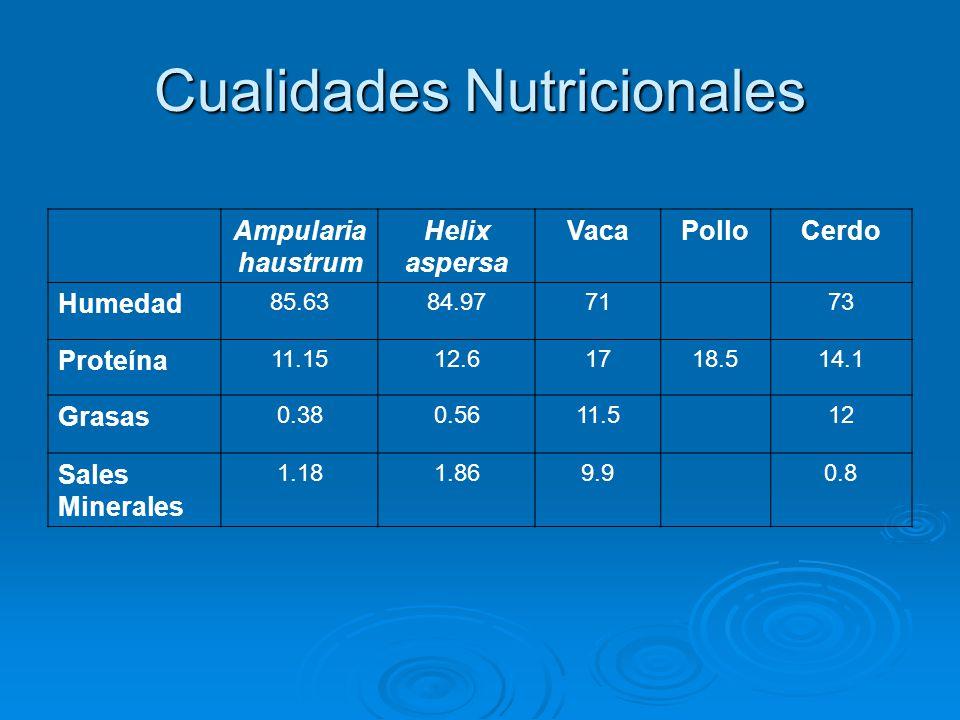 Cualidades Nutricionales Ampularia haustrum Helix aspersa VacaPolloCerdo Humedad 85.6384.977173 Proteína 11.1512.61718.514.1 Grasas 0.380.5611.512 Sales Minerales 1.181.869.90.8