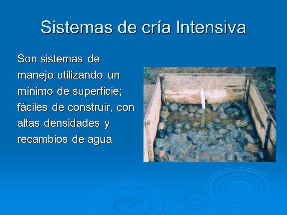 Sistemas de cría Intensiva Son sistemas de manejo utilizando un mínimo de superficie; fáciles de construir, con altas densidades y recambios de agua