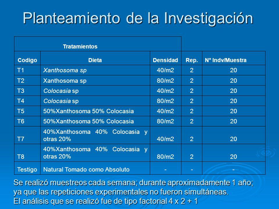 Planteamiento de la Investigación Tratamientos CodigoDietaDensidadRep.N° Indv/Muestra T1Xanthosoma sp40/m2220 T2Xanthosoma sp80/m2220 T3Colocasia sp40/m2220 T4Colocasia sp80/m2220 T550%Xanthosoma 50% Colocasia40/m2220 T650%Xanthosoma 50% Colocasia80/m2220 T7 40%Xanthosoma 40% Colocasia y otras 20%40/m2220 T8 40%Xanthosoma 40% Colocasia y otras 20%80/m2220 TestigoNatural Tomado como Absoluto--- Se realizó muestreos cada semana; durante aproximadamente 1 año; ya que las repeticiones experimentales no fueron simultáneas.
