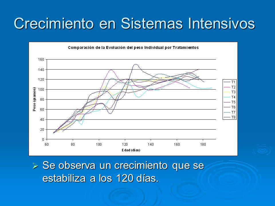 Crecimiento en Sistemas Intensivos  Se observa un crecimiento que se estabiliza a los 120 días.