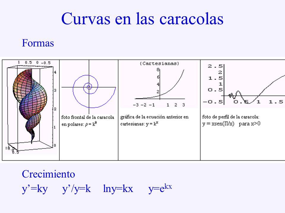 Curvas en las caracolas Formas Crecimiento y'=ky y'/y=k lny=kx y=e kx