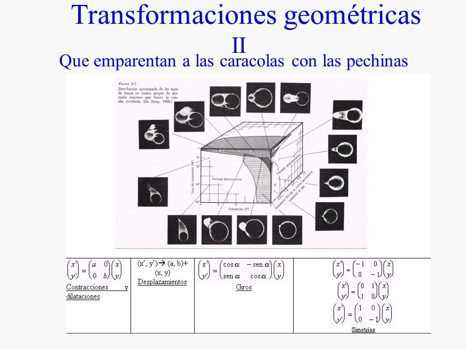 Transformaciones geométricas II Que emparentan a las caracolas con las pechinas