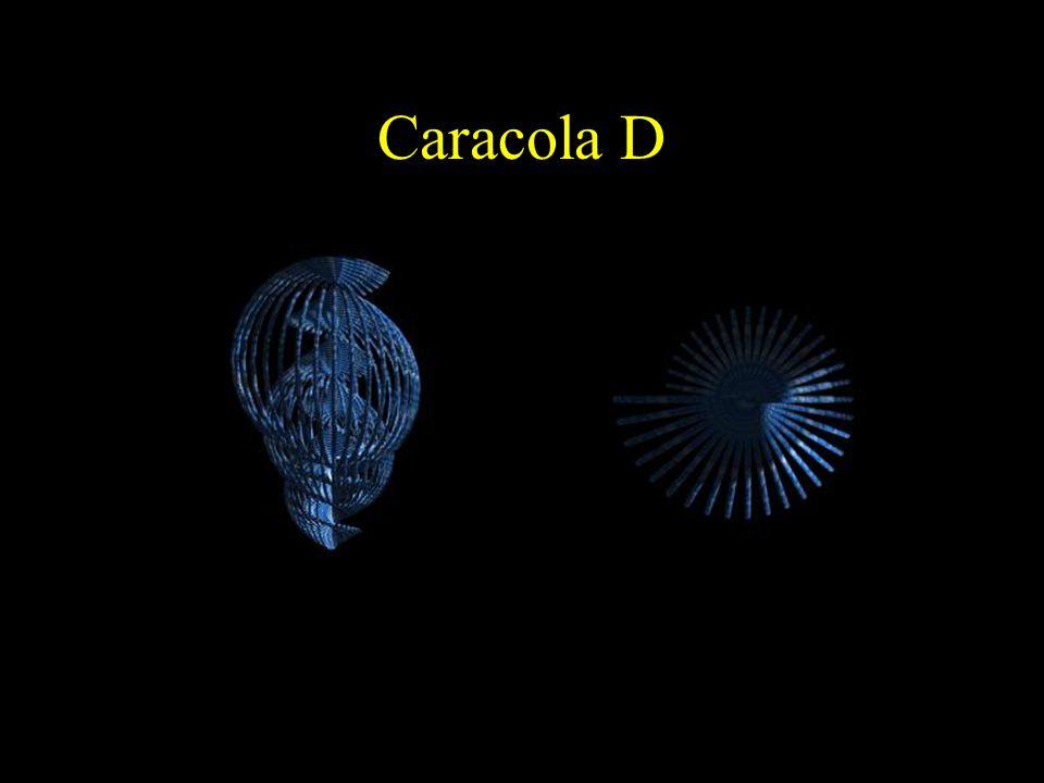 Caracola D