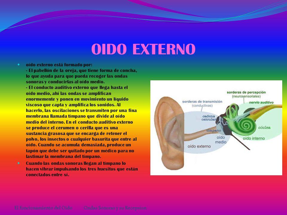 EL OÍDO Y SUS PARTES El oído externo comprende el pabellón auricular (oreja) y el conducto auditivo externo.