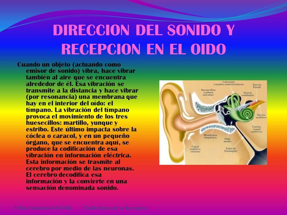 ONDAS SONORAS La onda sonora es captada por el pabellón auditivo, de allí pasa al conducto auditivo externo y llega a la membrana timpánica o tímpano.(Esto es el Oído Externo) Transmite la vibración hacia la cadena de huesecillos que son: 1.Martillo: Unido por su mango a la membrana timpánica.
