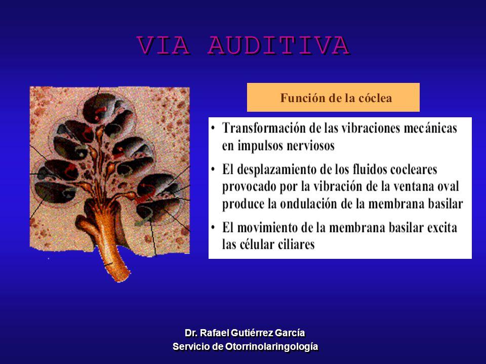 Dr. Rafael Gutiérrez García Servicio de Otorrinolaringología Dr.