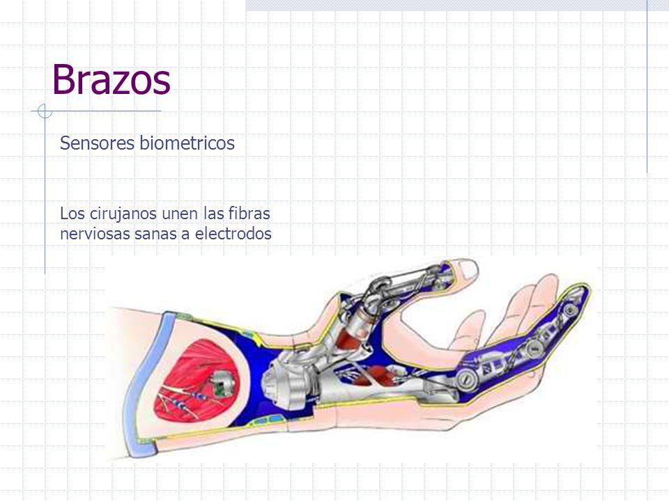 Brazos Sensores biometricos Los cirujanos unen las fibras nerviosas sanas a electrodos