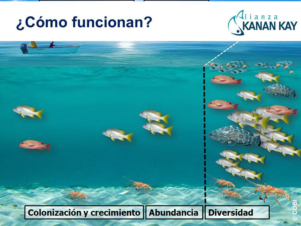 Colonización y crecimiento Área de pesca Refugio AbundanciaDiversidad Efecto de derrama Reproducción ¿Cómo funcionan.