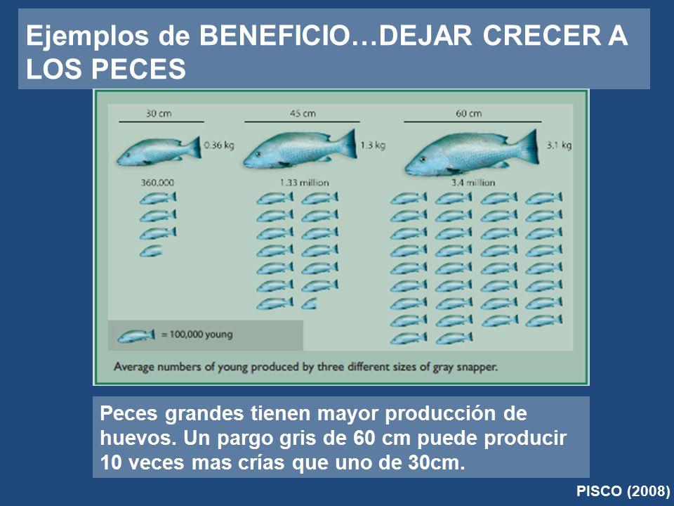 Ejemplos de BENEFICIO…DEJAR CRECER A LOS PECES PISCO (2008) Peces grandes tienen mayor producción de huevos.