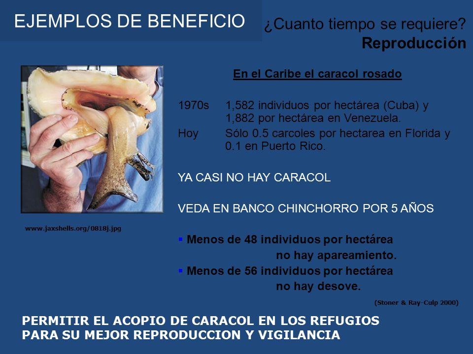 En el Caribe el caracol rosado 1970s1,582 individuos por hectárea (Cuba) y 1,882 por hectárea en Venezuela.