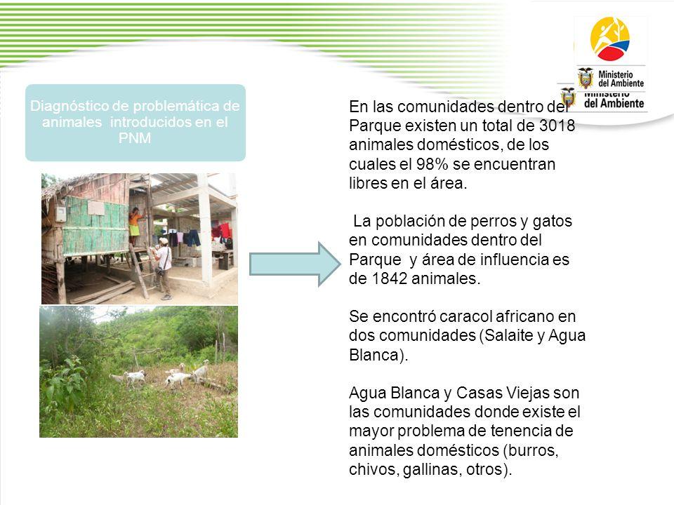 Diagnóstico de problemática de animales introducidos en el PNM En las comunidades dentro del Parque existen un total de 3018 animales domésticos, de los cuales el 98% se encuentran libres en el área.