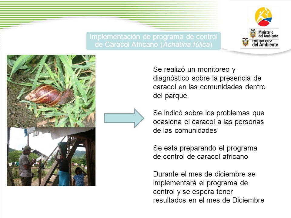 Implementación de programa de control de Caracol Africano (Achatina fúlica) Se realizó un monitoreo y diagnóstico sobre la presencia de caracol en las comunidades dentro del parque.
