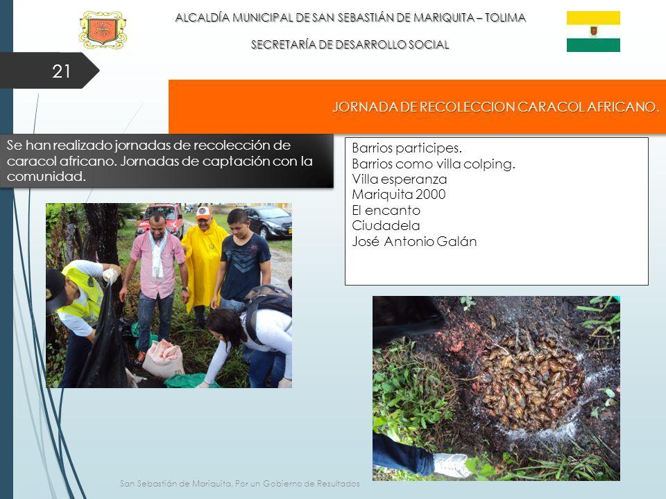 21 ALCALDÍA MUNICIPAL DE SAN SEBASTIÁN DE MARIQUITA – TOLIMA SECRETARÍA DE DESARROLLO SOCIAL JORNADA DE RECOLECCION CARACOL AFRICANO.