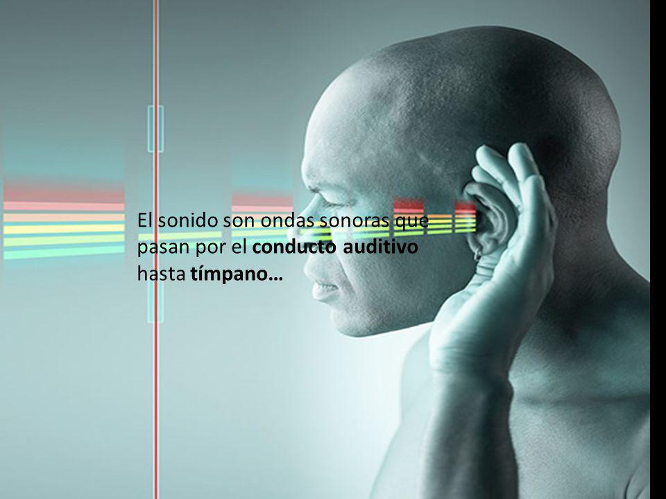 El sonido son ondas sonoras que pasan por el conducto auditivo hasta tímpano…