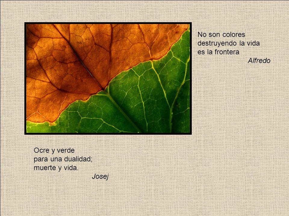 Sueño de otoño. Durmiendo al abrigo, el caracol. Barlo
