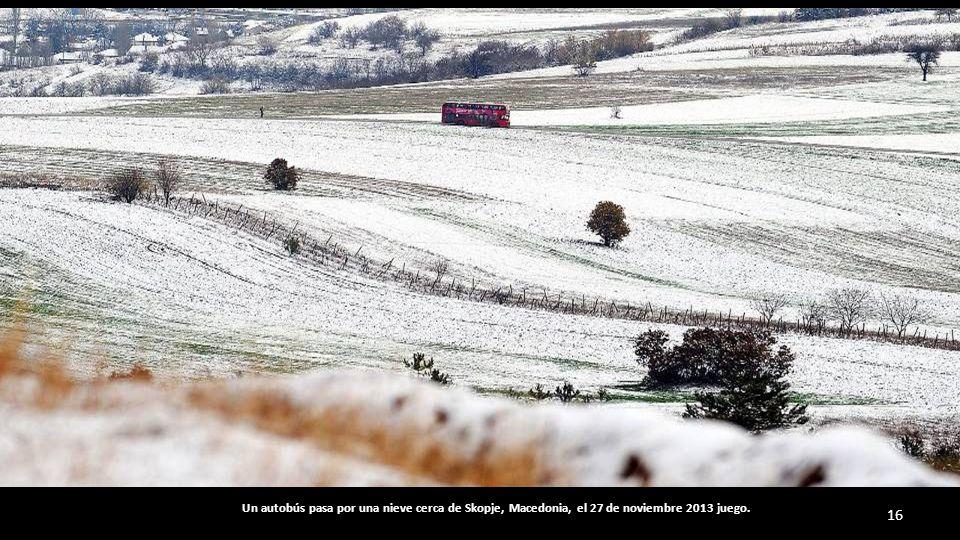 Redes Colorido se colocan bajo los olivos para recoger la aceituna 27 de noviembre 2013 en Castagniers, sureste de Francia.