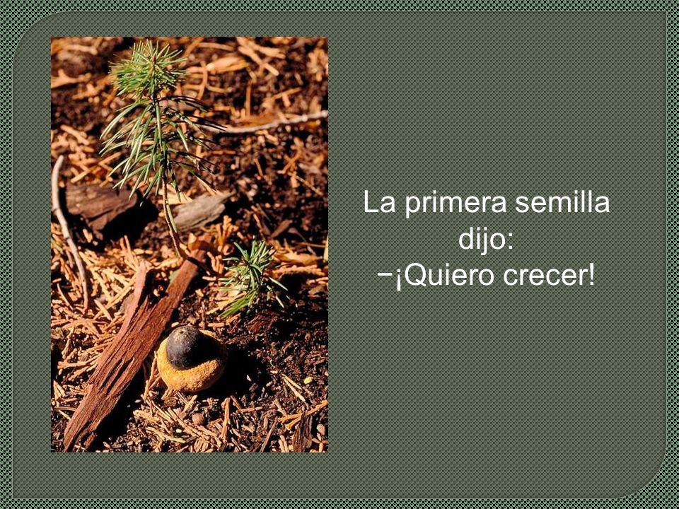 Dos semillas yacen lado a lado en el fértil suelo de primavera.