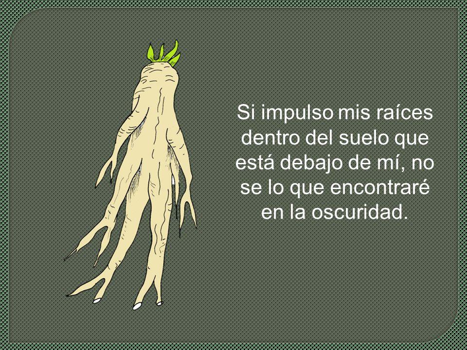 La segunda semilla dijo: −Tengo miedo.