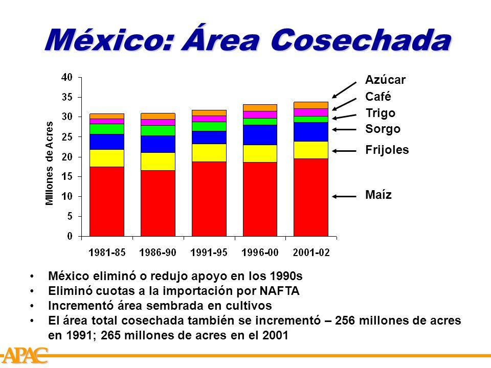 APCA México: Área Cosechada Millones de Acres Maíz Frijoles Trigo Sorgo Café Azúcar México eliminó o redujo apoyo en los 1990s Eliminó cuotas a la importación por NAFTA Incrementó área sembrada en cultivos El área total cosechada también se incrementó – 256 millones de acres en 1991; 265 millones de acres en el 2001
