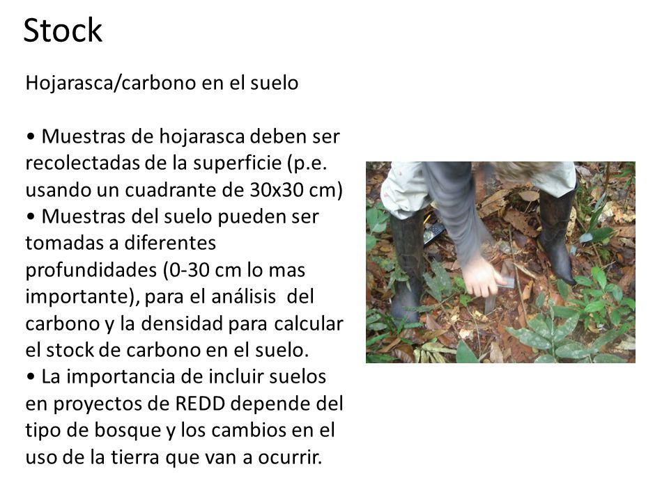 Hojarasca/carbono en el suelo Muestras de hojarasca deben ser recolectadas de la superficie (p.e.