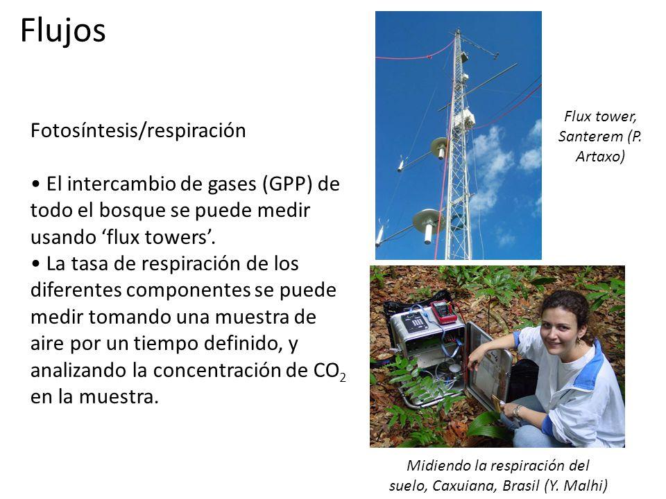 Fotosíntesis/respiración El intercambio de gases (GPP) de todo el bosque se puede medir usando 'flux towers'.