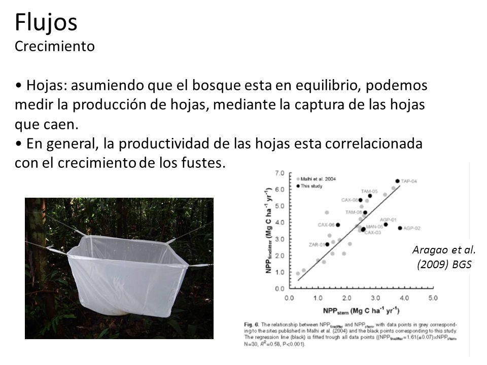 Crecimiento Hojas: asumiendo que el bosque esta en equilibrio, podemos medir la producción de hojas, mediante la captura de las hojas que caen.