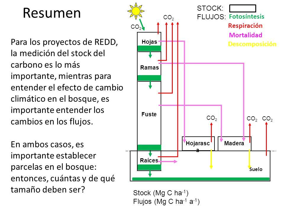 Resumen Hojas Raíces Fuste Ramas CO 2 Fotosíntesis Hojarasc a Suelo Mortalidad Madera CO 2 Descomposición STOCK: FLUJOS: Stock (Mg C ha -1 ) Flujos (Mg C ha -1 a -1 ) Respiración CO 2 Para los proyectos de REDD, la medición del stock del carbono es lo más importante, mientras para entender el efecto de cambio climático en el bosque, es importante entender los cambios en los flujos.