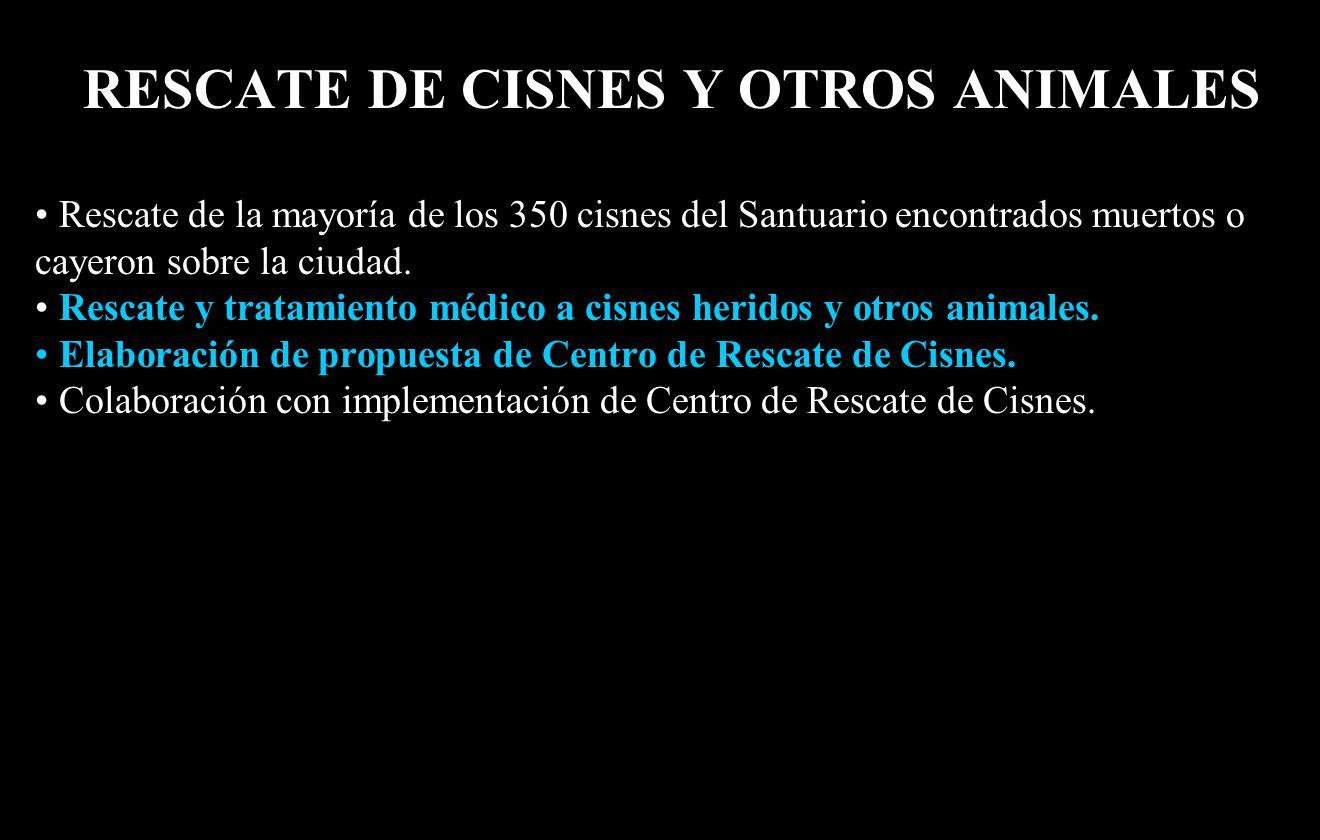 RESCATE DE CISNES Y OTROS ANIMALES Rescate de la mayoría de los 350 cisnes del Santuario encontrados muertos o cayeron sobre la ciudad.