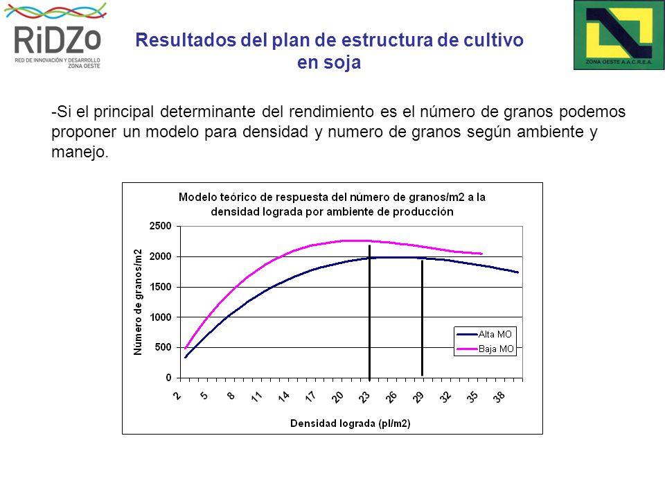 -Si el principal determinante del rendimiento es el número de granos podemos proponer un modelo para densidad y numero de granos según ambiente y manejo.