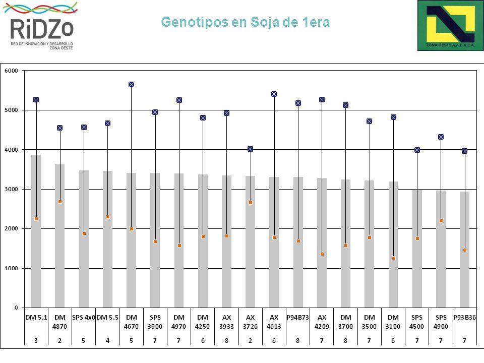 Genotipos en Soja de 1era