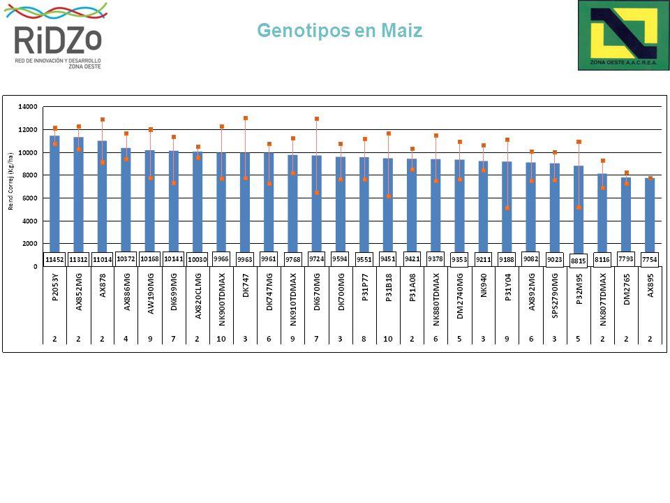 Genotipos en Maiz