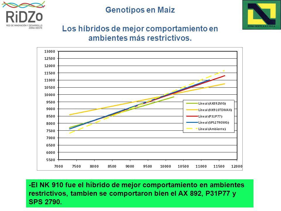 Genotipos en Maiz Los híbridos de mejor comportamiento en ambientes más restrictivos.