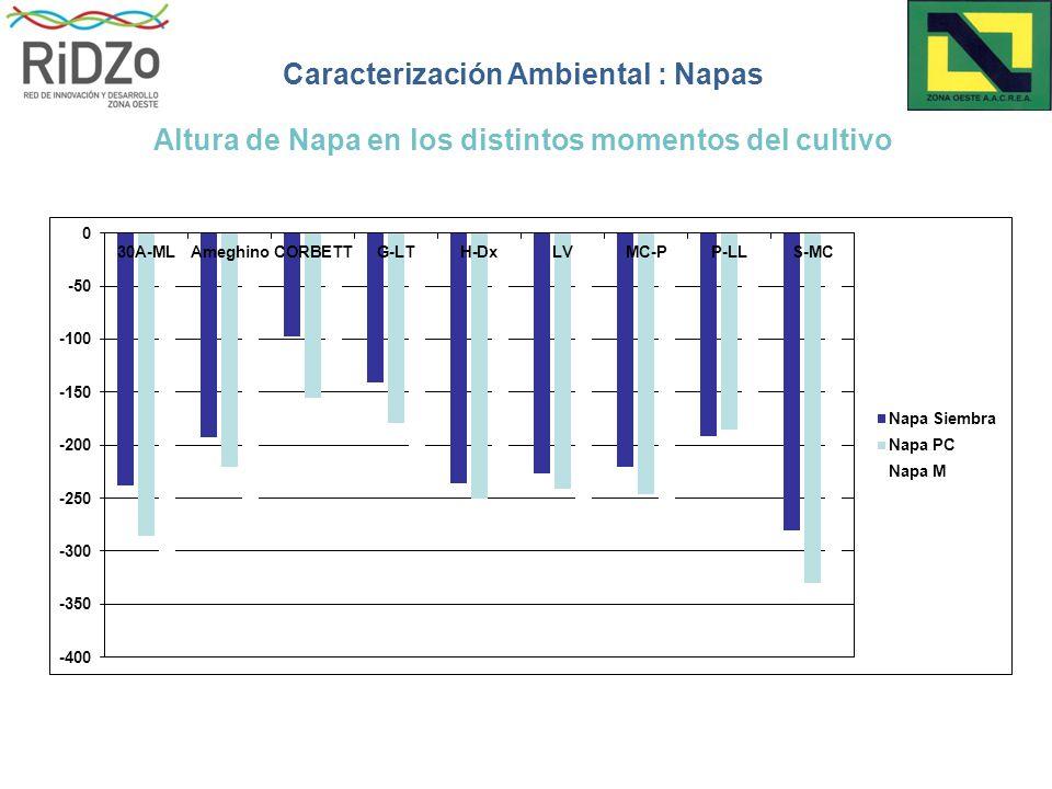 Caracterización Ambiental : Napas Altura de Napa en los distintos momentos del cultivo