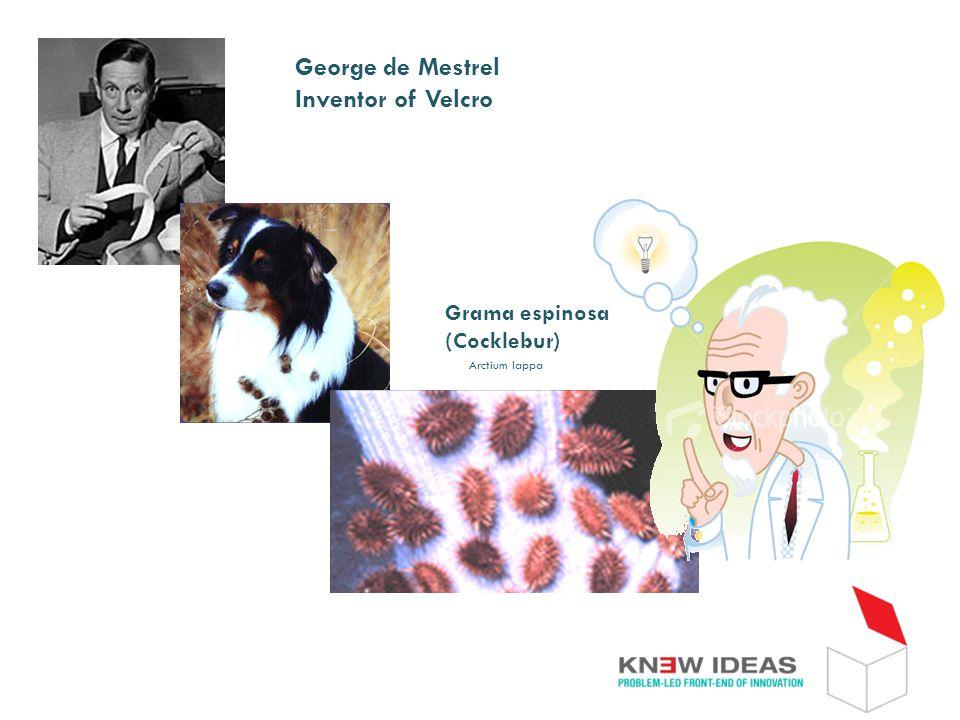 George de Mestrel Inventor of Velcro Grama espinosa (Cocklebur) Arctium lappa