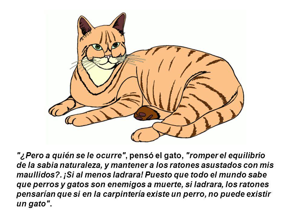 Esto, hizo meditar al gato, y llegar a la conclusión de que la táctica de maullar constantemente para amedrentar a los ratones era nefasta.