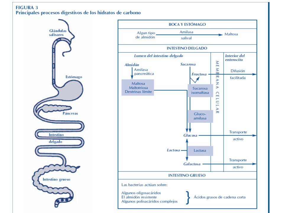Nutrición Aplicada 2008. C. Cabrera. Facultad de Agronomía