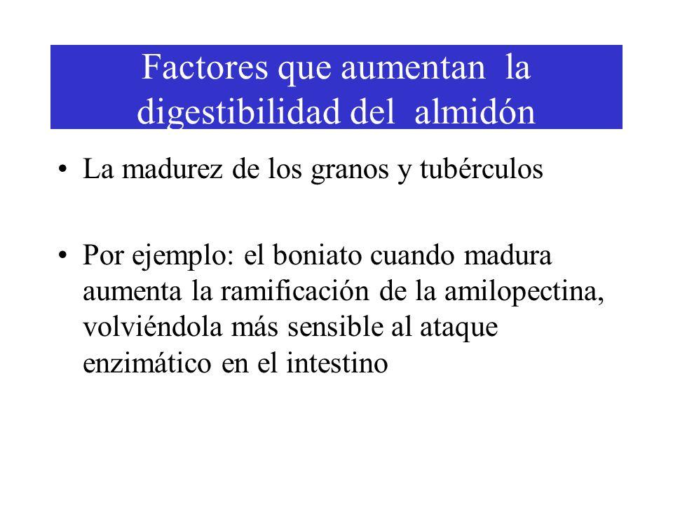La madurez de los granos y tubérculos Por ejemplo: el boniato cuando madura aumenta la ramificación de la amilopectina, volviéndola más sensible al ataque enzimático en el intestino Factores que aumentan la digestibilidad del almidón