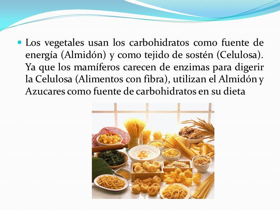 Los vegetales usan los carbohidratos como fuente de energía (Almidón) y como tejido de sostén (Celulosa).