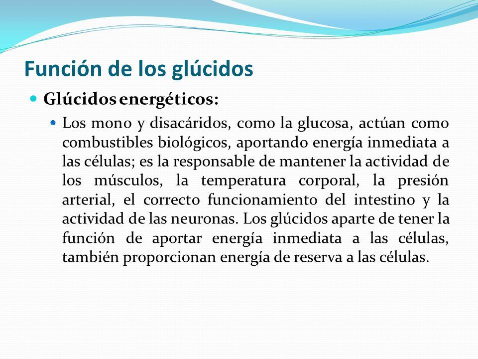 Función de los glúcidos Glúcidos energéticos: Los mono y disacáridos, como la glucosa, actúan como combustibles biológicos, aportando energía inmediata a las células; es la responsable de mantener la actividad de los músculos, la temperatura corporal, la presión arterial, el correcto funcionamiento del intestino y la actividad de las neuronas.