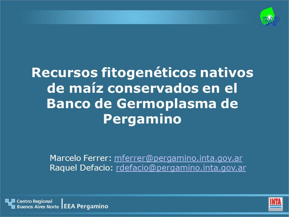 Recursos fitogenéticos nativos de maíz conservados en el Banco de Germoplasma de Pergamino Marcelo Ferrer: mferrer@pergamino.inta.gov.armferrer@pergamino.inta.gov.ar Raquel Defacio: rdefacio@pergamino.inta.gov.arrdefacio@pergamino.inta.gov.ar