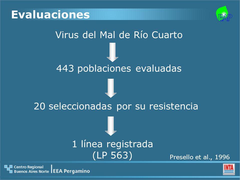Evaluaciones Virus del Mal de Río Cuarto 443 poblaciones evaluadas 20 seleccionadas por su resistencia 1 línea registrada (LP 563) Presello et al., 1996