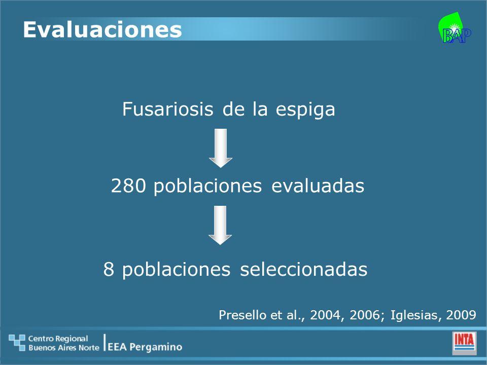 Evaluaciones Fusariosis de la espiga 280 poblaciones evaluadas 8 poblaciones seleccionadas Presello et al., 2004, 2006; Iglesias, 2009