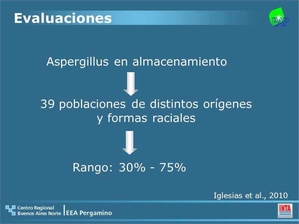 Evaluaciones Aspergillus en almacenamiento 39 poblaciones de distintos orígenes y formas raciales Rango: 30% - 75% Iglesias et al., 2010