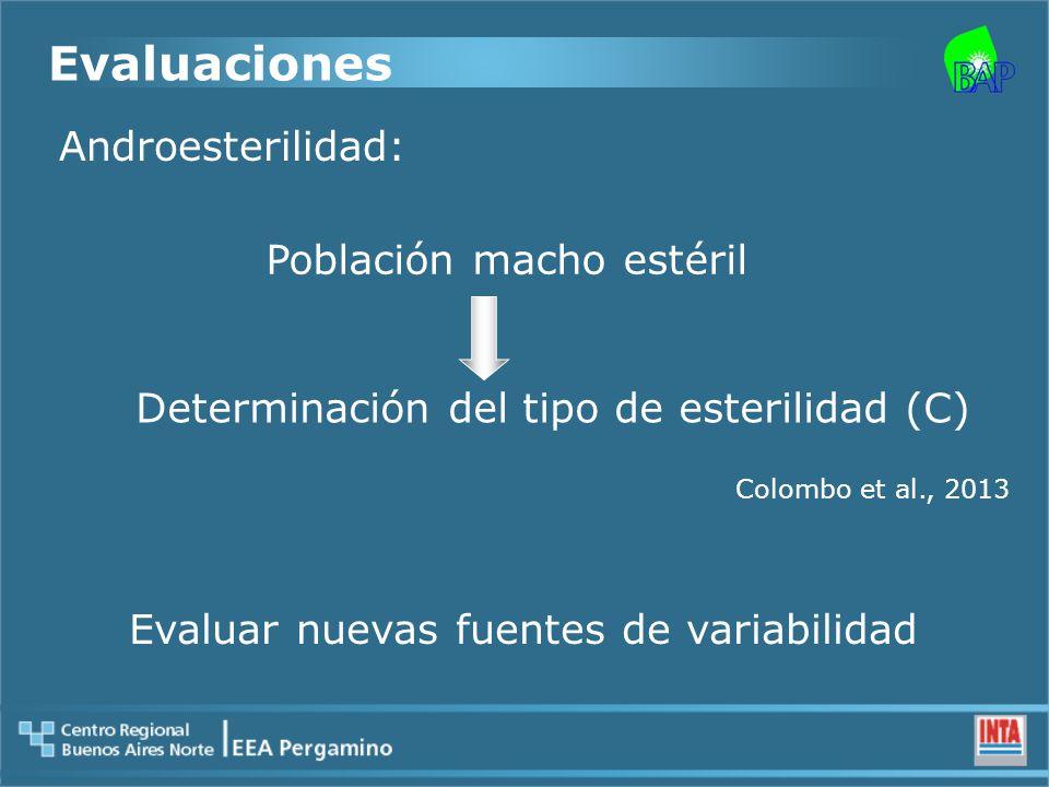 Determinación del tipo de esterilidad (C) Evaluaciones Evaluar nuevas fuentes de variabilidad Androesterilidad: Población macho estéril Colombo et al., 2013